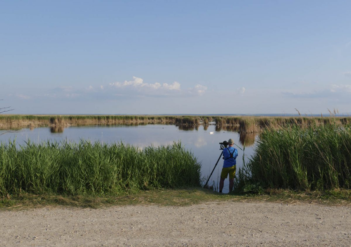 Vogelbeobachtung am Neusiedler See